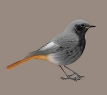 Ptaki niszczą styropian